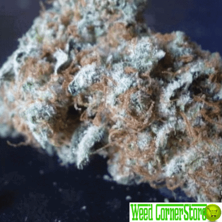northern lights strain, buy northern lights, norther lights for sale, buy weed online, by marijuana online