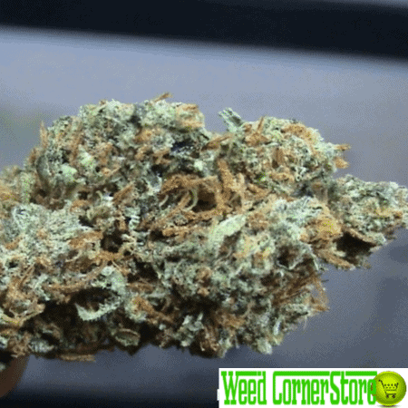 super silver haze, buy super silver haze, buy weed online, buy marijuana online, buy super silver haze online, super silver haze thc, weed strains super silver haze