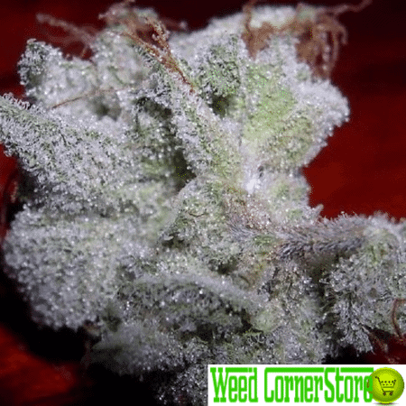 white widow marijuana for sale weed cornerstore